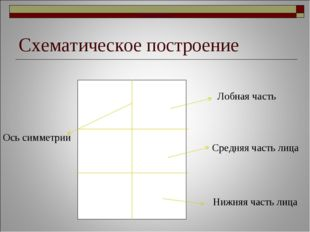 Схематическое построение Лобная часть Носовая часть Носовая часть Средняя час