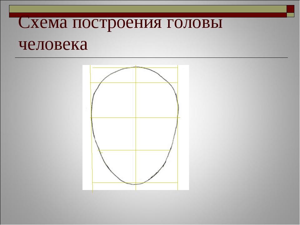Схема построения головы человека