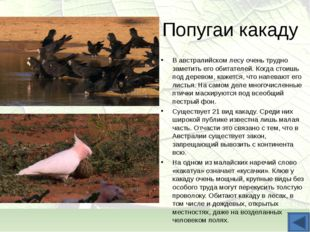 Попугаи какаду В австралийском лесу очень трудно заметить его обитателей. Ког