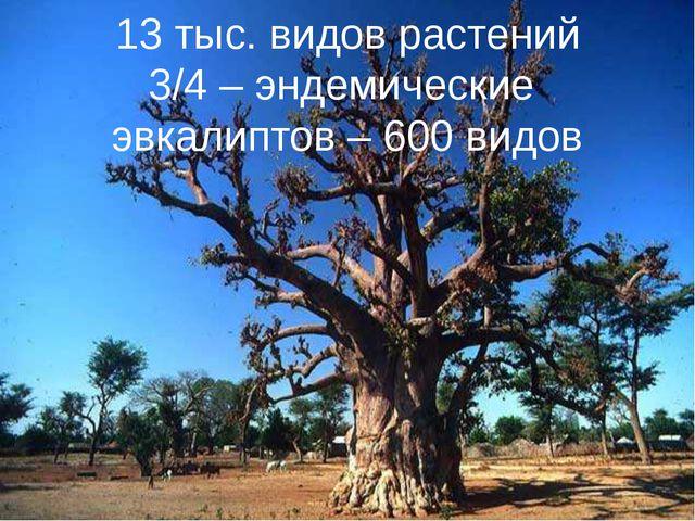 13 тыс. видов растений 3/4 – эндемические эвкалиптов – 600 видов