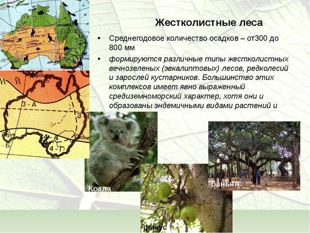 Жестколистные леса Среднегодовое количество осадков – от300 до 800 мм формиру...