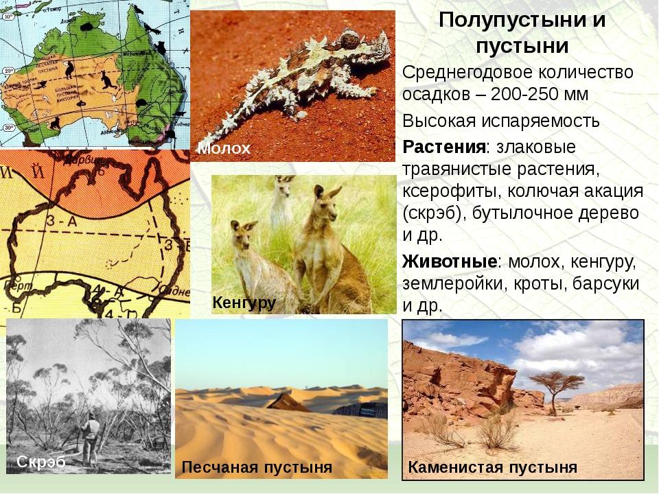 Полупустыни и пустыни Среднегодовое количество осадков – 200-250 мм Высокая и...