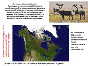 Спутниковый снимок Канады. Повсюду в стране, кроме крайнего юга, преобладает