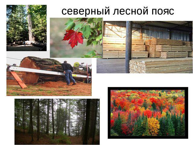 северный лесной пояс