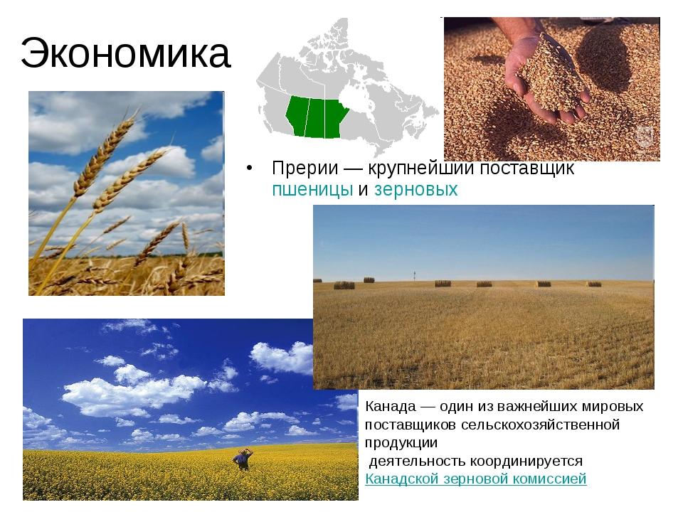 Экономика Прерии— крупнейший поставщик пшеницы и зерновых Канада— один из в...