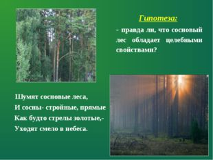 Шумят сосновые леса, И сосны- стройные, прямые Как будто стрелы золотые,- Ух