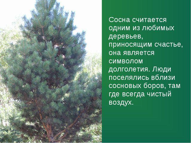 Сосна считается одним из любимых деревьев, приносящим счастье, она является с...