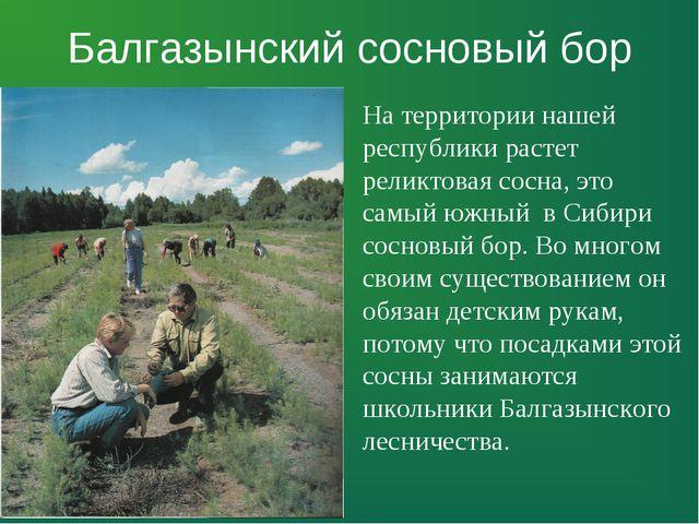 Балгазынский сосновый бор На территории нашей республики растет реликтовая со...