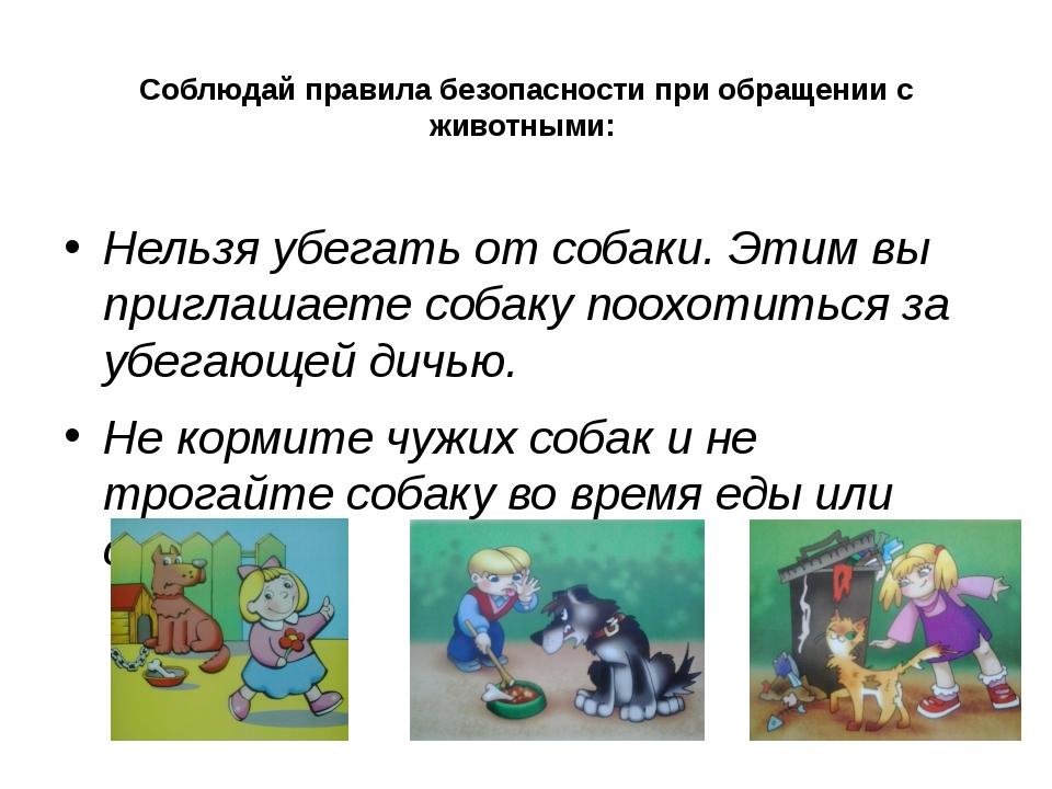 Соблюдай правила безопасности при обращении с животными: Нельзя убегать от со...