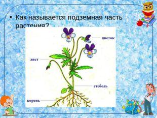 Как называется подземная часть растения?