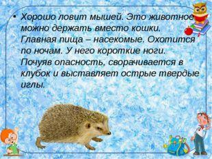 Хорошо ловит мышей. Это животное можно держать вместо кошки. Главная пища – н