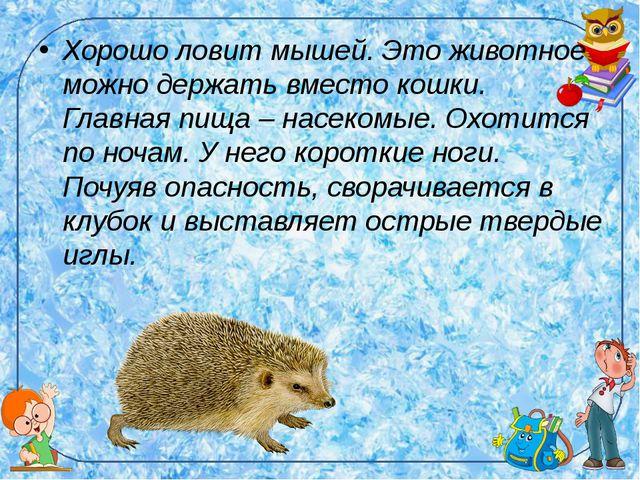 Хорошо ловит мышей. Это животное можно держать вместо кошки. Главная пища – н...