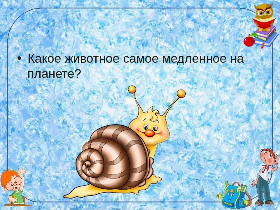 Какое животное самое медленное на планете?