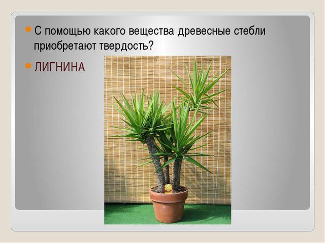 С помощью какого вещества древесные стебли приобретают твердость? ЛИГНИНА