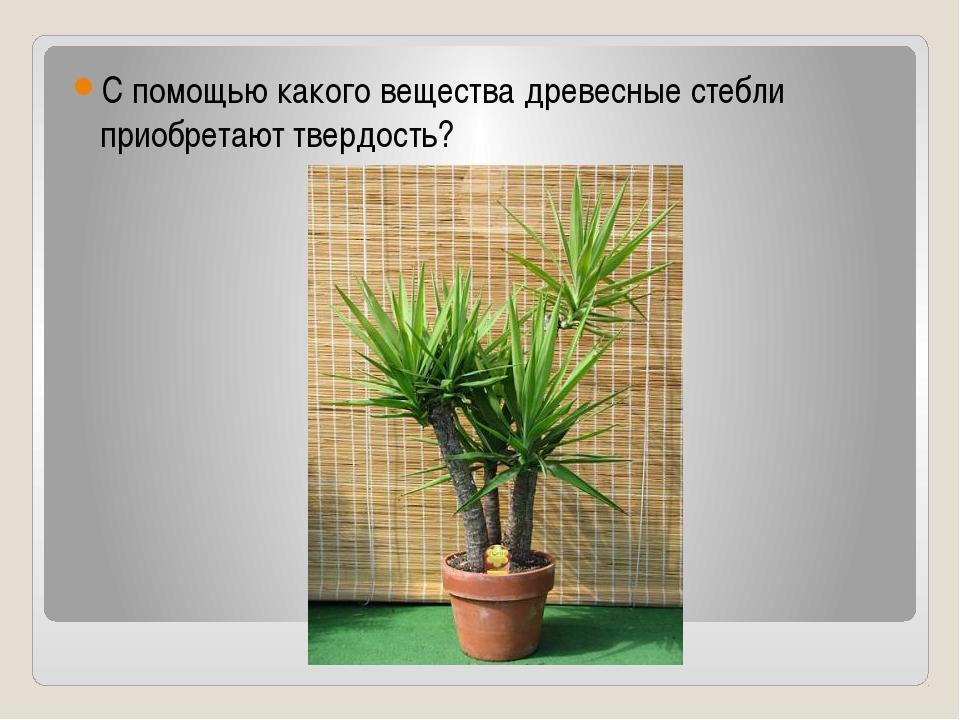 С помощью какого вещества древесные стебли приобретают твердость?