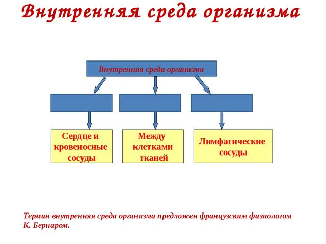Внутренняя среда организма Внутренняя среда организма Терминвнутренняя среда...