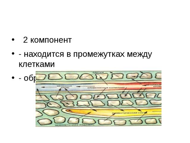 2 компонент - находится в промежутках между клетками - образуется из плазмы...
