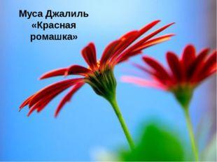 Муса Джалиль «Красная ромашка»
