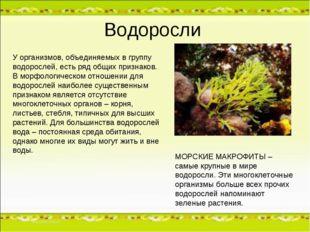 Водоросли У организмов, объединяемых в группу водорослей, есть ряд общих приз