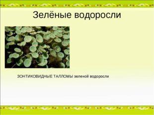 Зелёные водоросли ЗОНТИКОВИДНЫЕ ТАЛЛОМЫ зеленой водоросли