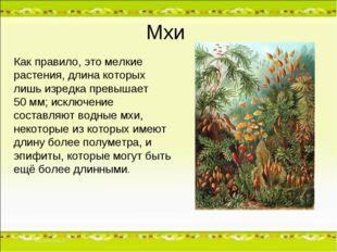 Мхи Как правило, это мелкие растения, длина которых лишь изредка превышает 50