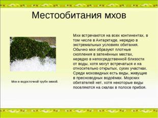 Местообитания мхов Мхи встречаются на всех континентах, в том числе в Антаркт