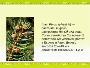 Сосна обыкнове́нная (лат.Pínus sylvéstris) — растение, широко распространённ