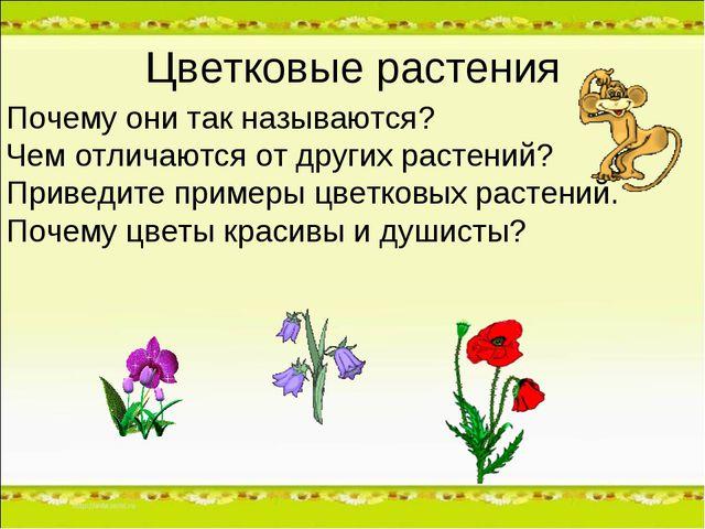 Цветковые растения Почему они так называются? Чем отличаются от других растен...