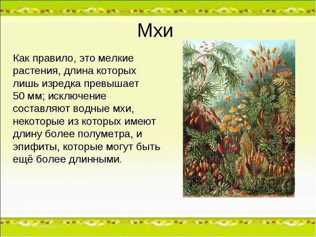 Мхи Как правило, это мелкие растения, длина которых лишь изредка превышает 50...