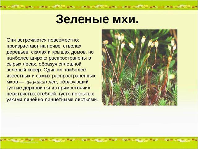 Зеленые мхи. Они встречаются повсеместно: произрастают на почве, стволах дере...