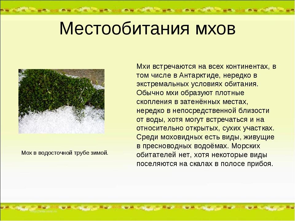 Местообитания мхов Мхи встречаются на всех континентах, в том числе в Антаркт...