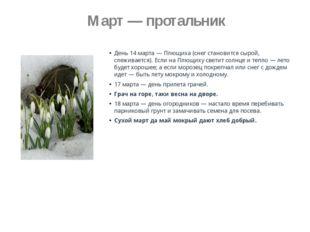 Март — протальник День 14 марта — Плющиха (снег становится сырой, слеживаетс