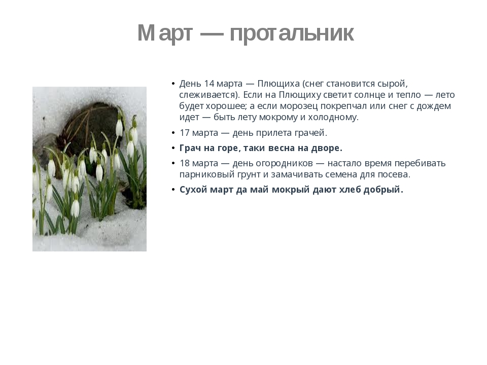 Март — протальник День 14 марта — Плющиха (снег становится сырой, слеживаетс...