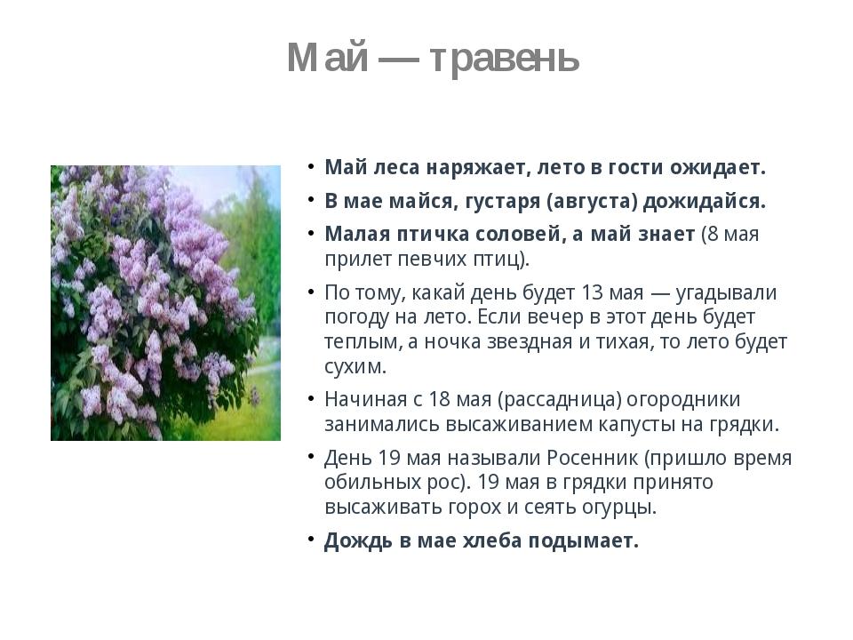 Май — травень Май леса наряжает, лето в гости ожидает. В мае майся, густаря...