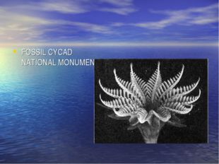 FOSSIL CYCAD NATIONAL MONUMENT