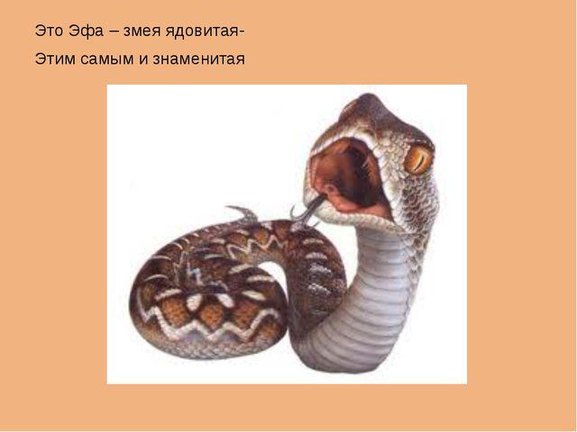 Это Эфа – змея ядовитая- Этим самым и знаменитая