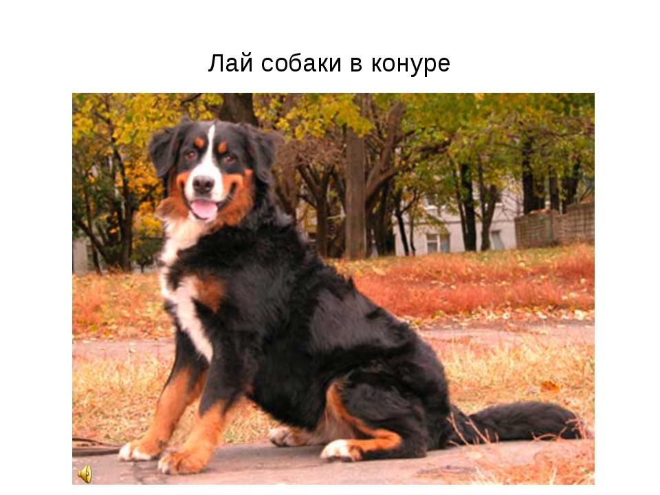 Лай собаки в конуре