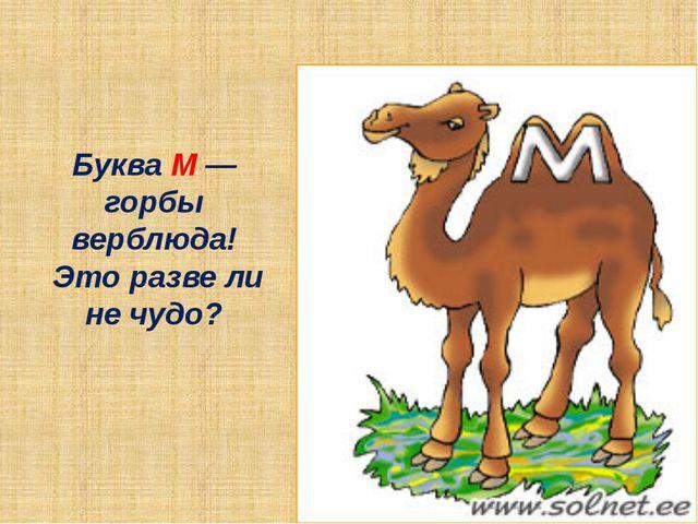 Буква М — горбы верблюда! Это разве ли не чудо?
