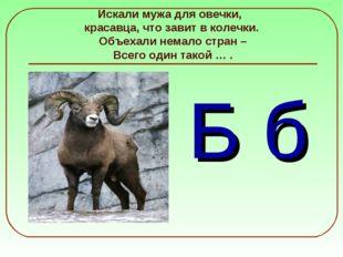 Искали мужа для овечки, красавца, что завит в колечки. Объехали немало стран