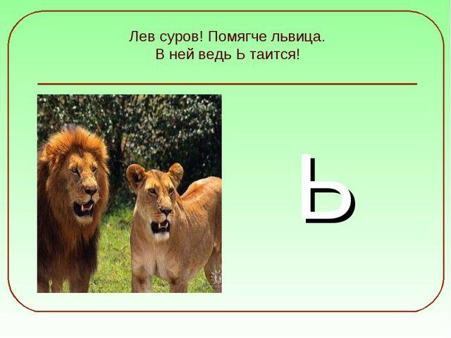 Лев суров! Помягче львица. В ней ведь Ь таится! Ь