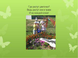Где растут цветочки? Ведь растут они в траве И на каждой кочке!