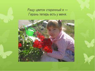 Ращу цветок старинный я — Герань теперь есть у меня.