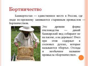 Бортничество Башкортостан — единственное место в России, где люди по-прежнему