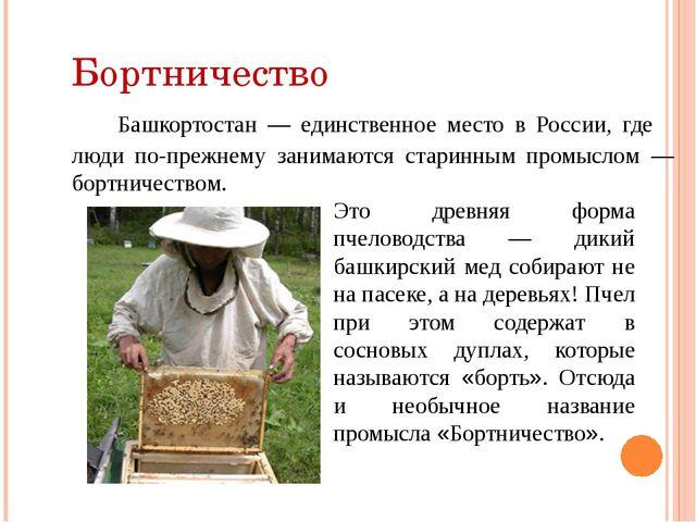 Бортничество Башкортостан — единственное место в России, где люди по-прежнему...