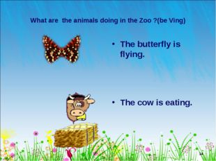 * What are the animals doing in the Zoo ?(be Ving) The butterfly is flying. T