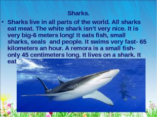 * Sharks. Sharks live in all parts of the world. All sharks eat meat. The whi