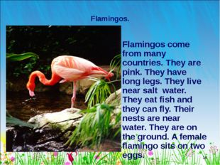 * Flamingos. Flamingos come from many countries. They are pink. They have lon