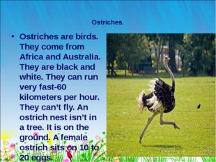 * Ostriches. Ostriches are birds. They come from Africa and Australia. They a