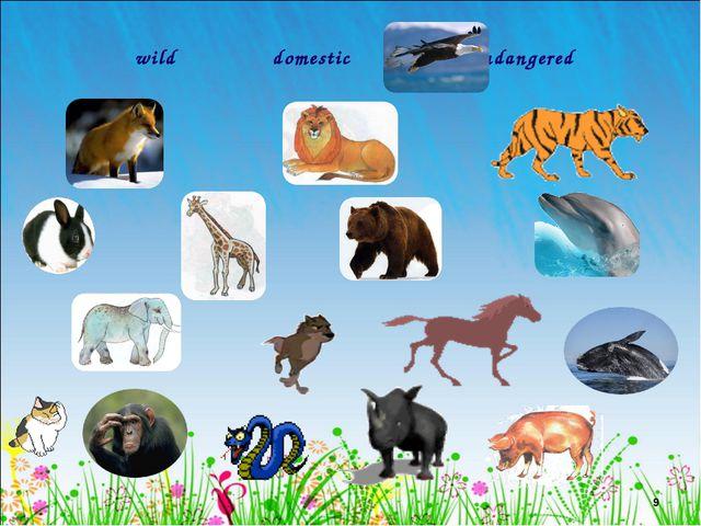 * wild domestic endangered Лето