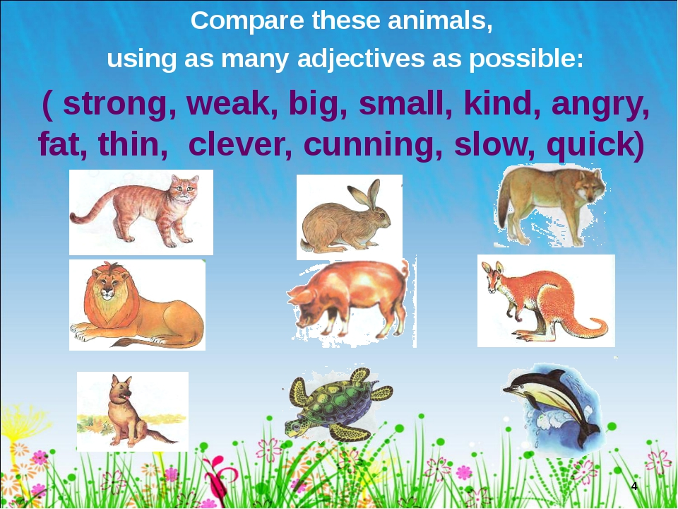 Compare these animals, using as many adjectives as possible: ( strong, weak,...